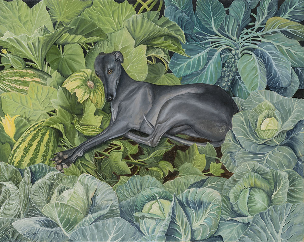 Whippet in Cabbage Patch