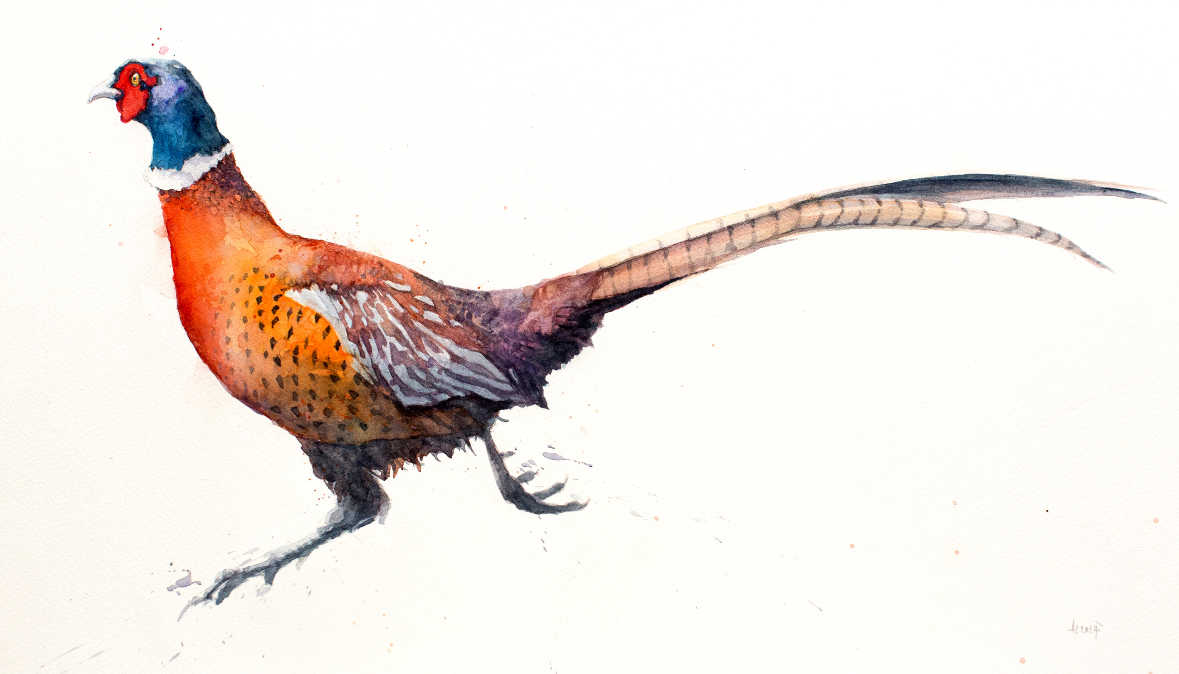 Pheasant of North Norfolk