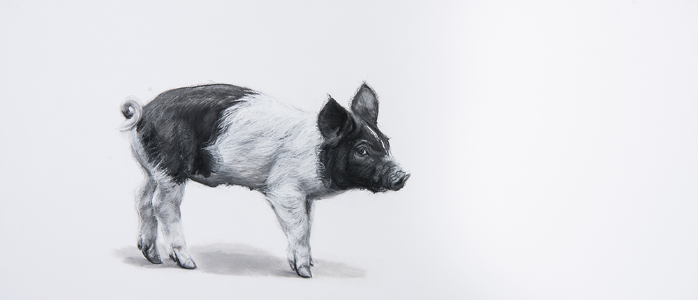 Piglet by Lucy Boydell