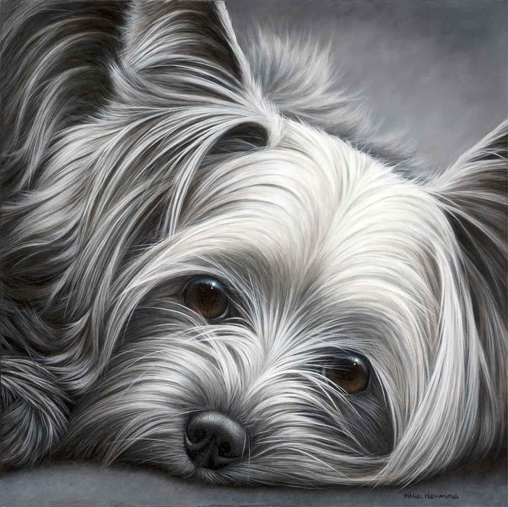 Yorkshire Terrier by Nigel Hemming