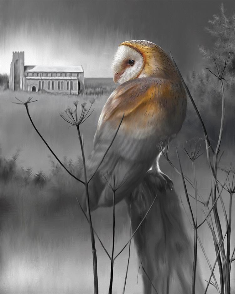 Barn Owl at Salthouse