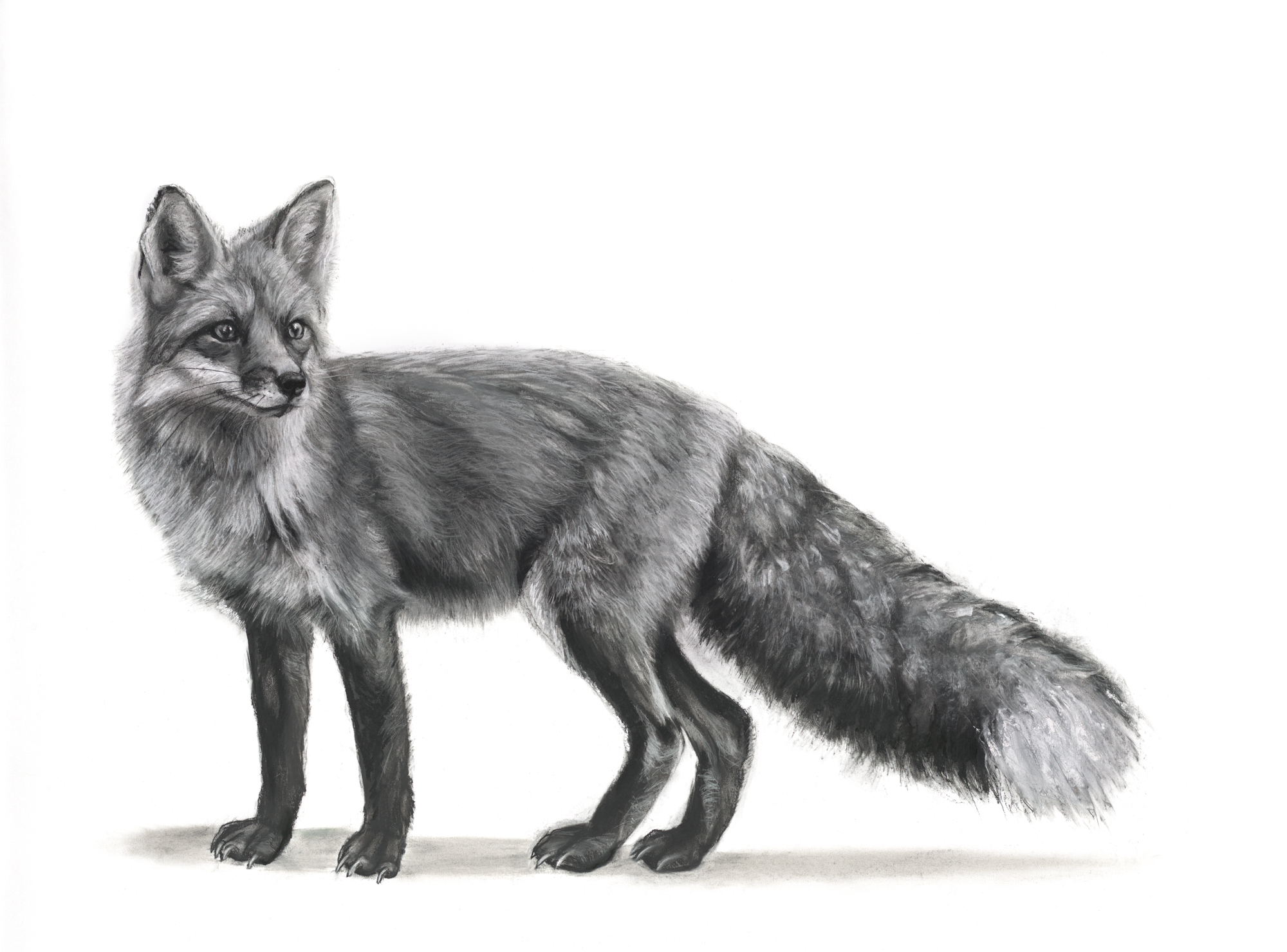 Vixen by Lucy Boydell