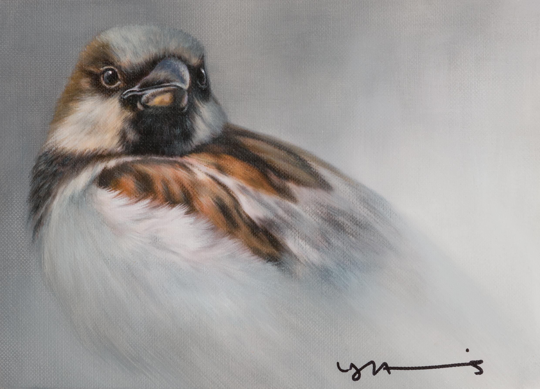 House Sparrow by Nigel Hemming