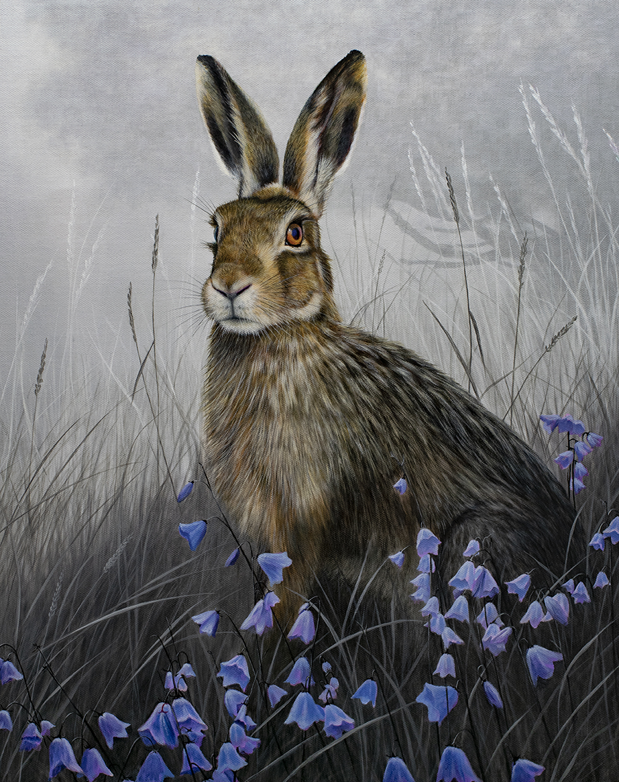 Brown Hare and Harebells