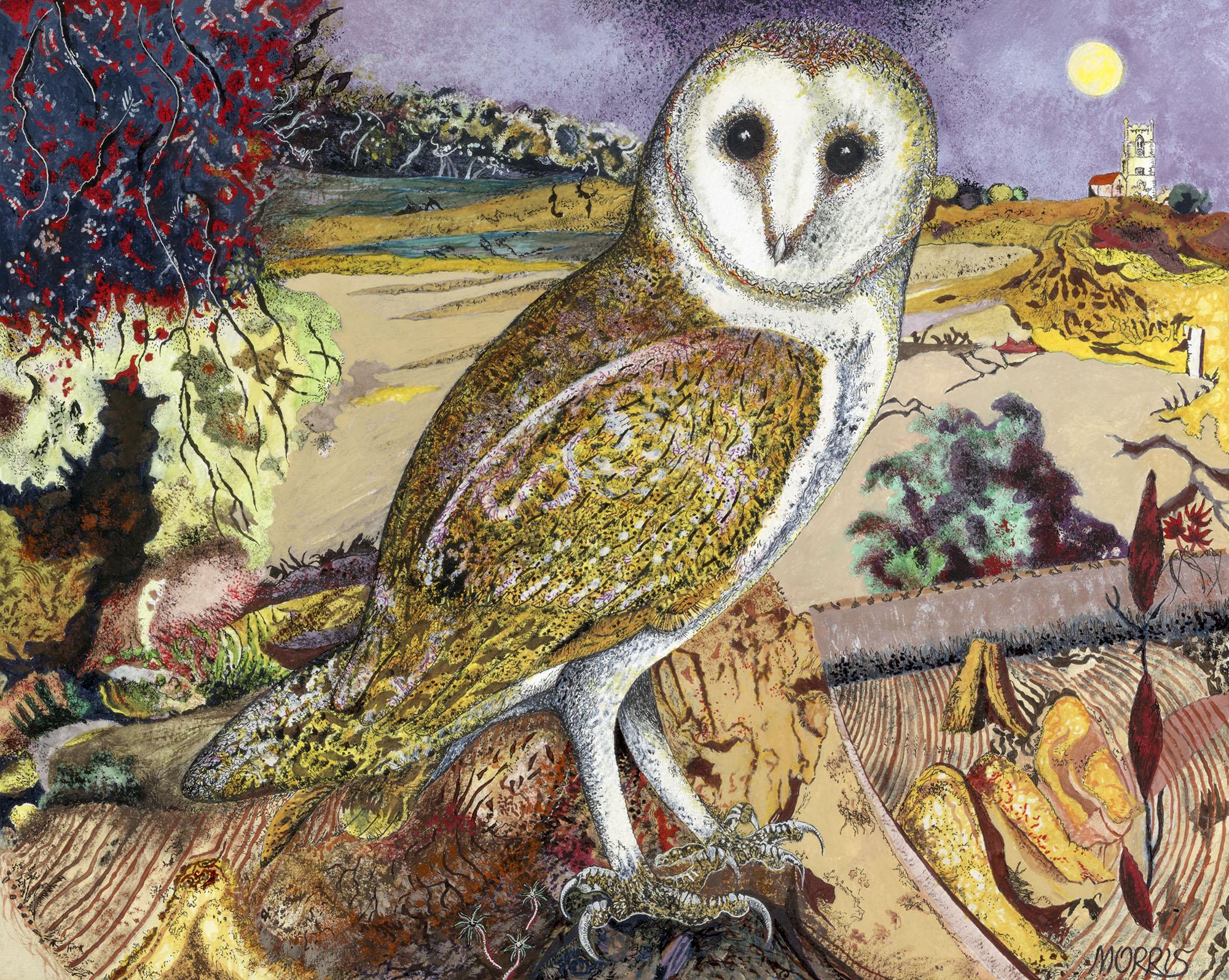 Barn Owl by Barrie Morris