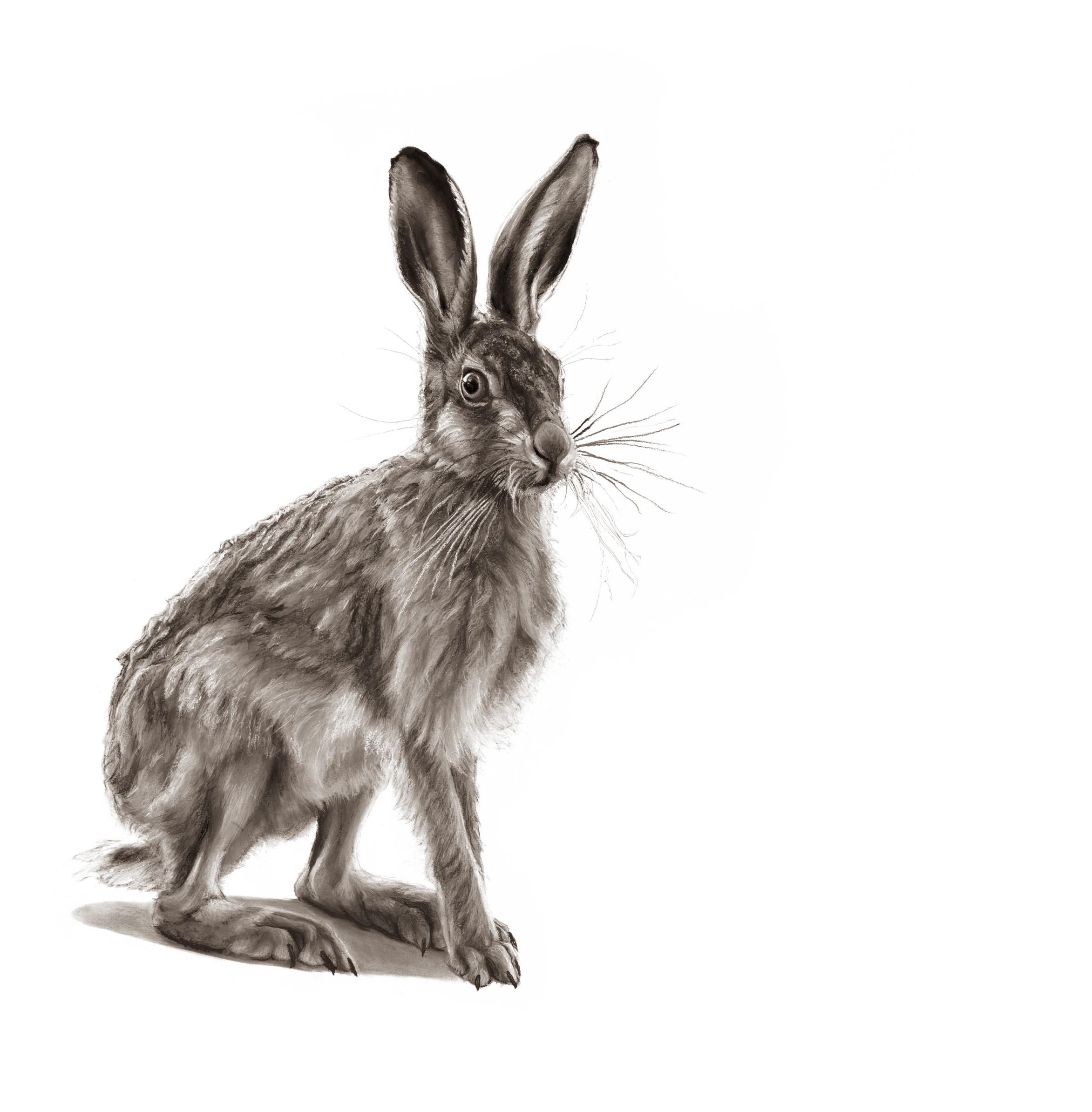 A Nimble Hare